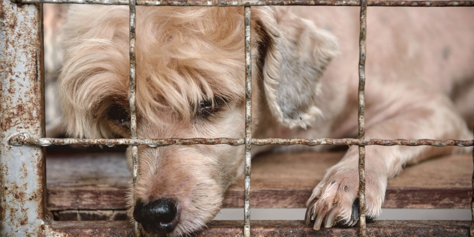 Puppy Mills and Puppy Farms
