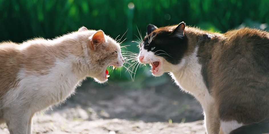 When Pets Don't Get Along